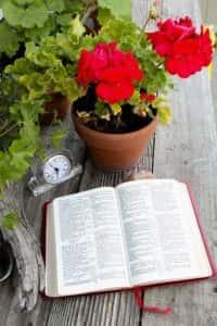 bible environment